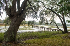 A typical lowcountry scene...this one out back of our inn on Boone Hall Creek