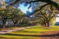 Oak lined driveway at Boone Hall