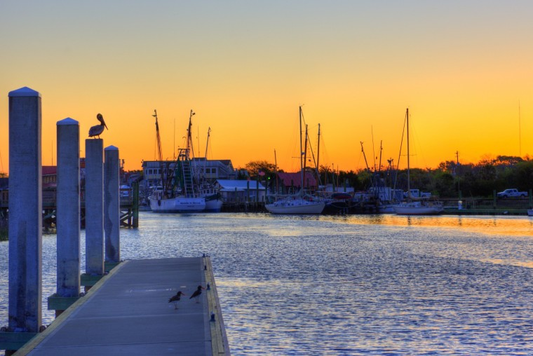 A pelican watches Shem Creek for breakfast as the sun rises