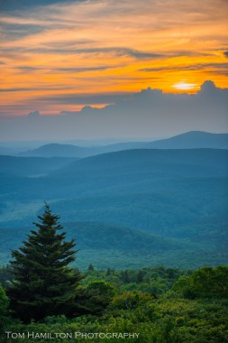 """Spruce Sunset"""