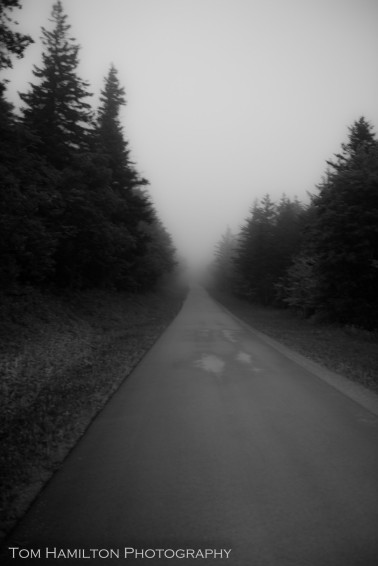 """Socked in Road"" - National Forest Road 104 climbs into the fog bank blanketing Spruce Knob"