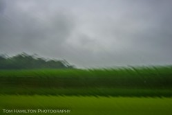 Rain on the window accentuates this Northern Virginia cornfield