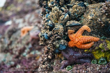 Abundant marine life clings to every surface