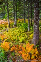 The Boreal forest floor begins to show the colors of autumn