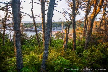 Coastal boreal forest at Green Point, Gros Morne National Park