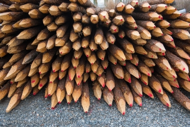 """Pine Pencils"""