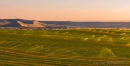 Irrigated fields and sand dunes in near-sunset lighting