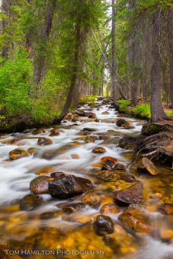 Fishook creek in the Sawtooth national Recreation Area
