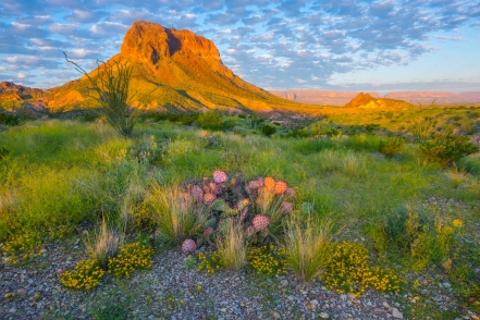 Beautiful scenery is pervasive in Big Bend.